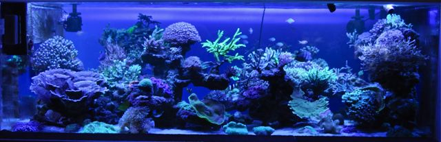 le reef tank d'harold - Page 37 M10