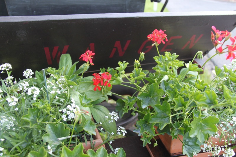 Fleurs de Wangen 2013 Wangen22