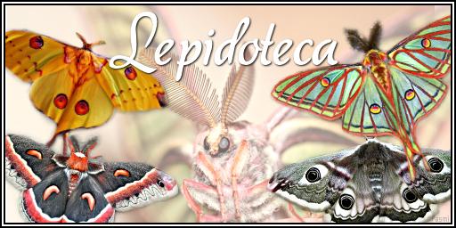 Aesculus hippocastanum - Castaño de Indias Banner10