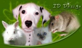 Nos ami(e)s les animaux