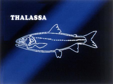 THALASSA (La Route du Rhum édition 2010) Thalas10