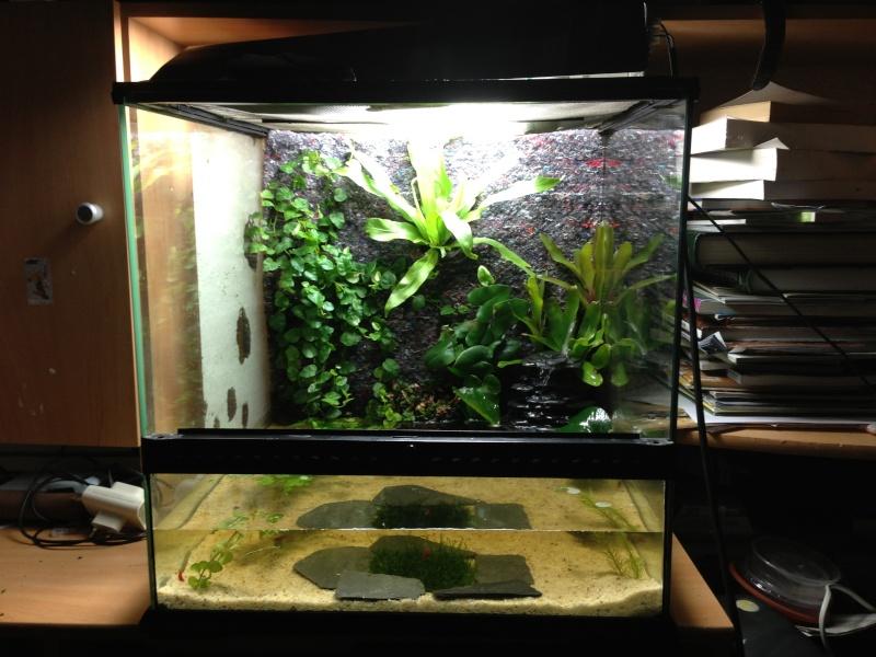 Paludarium à crevettes Image14