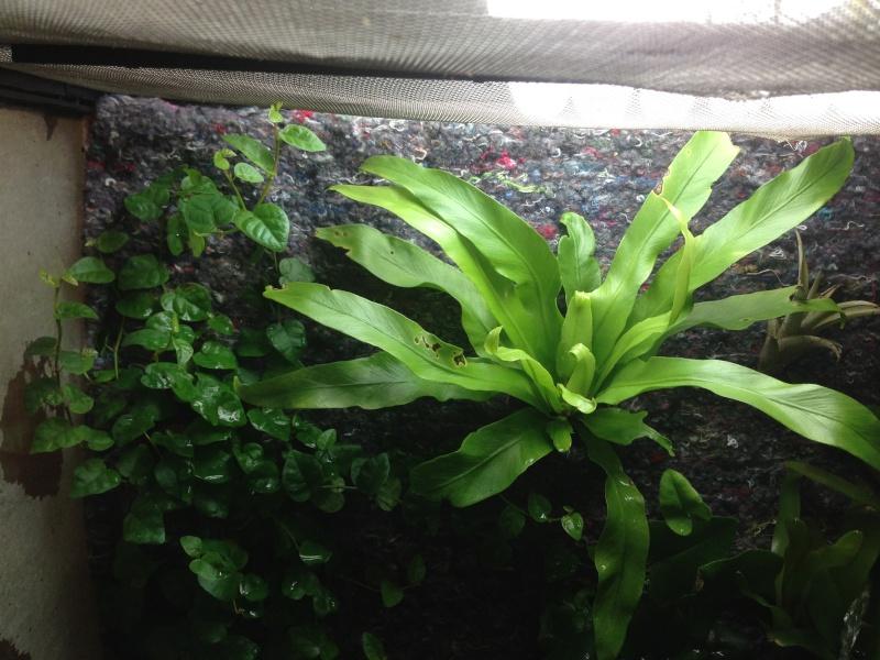 Paludarium à crevettes Image15