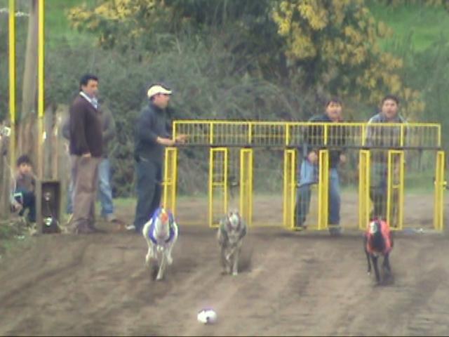 Grandes carreras y clásicos en Chillán para este domingo 27 20090910