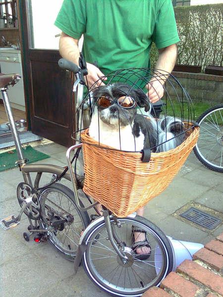 Comment transporter son chien sur son B? 710