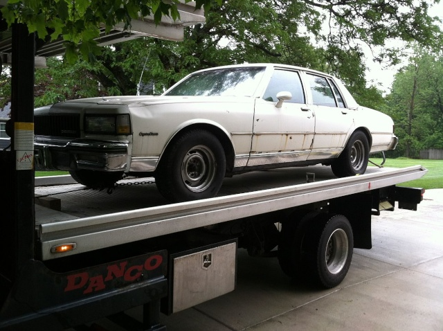 brought the Caprice home. Cap110