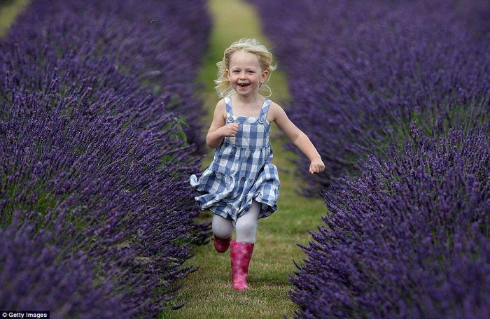Beautiful Lavender Fields 2a6m6h10