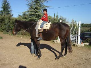 cherche cheval porteur : Trouvé Feria_10