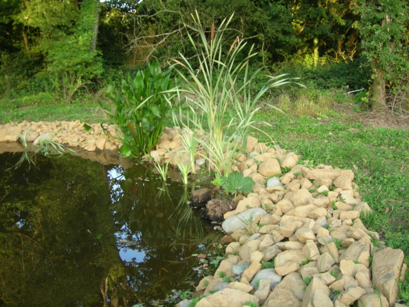 le plan d'eau avance petit à petit Dscn1727