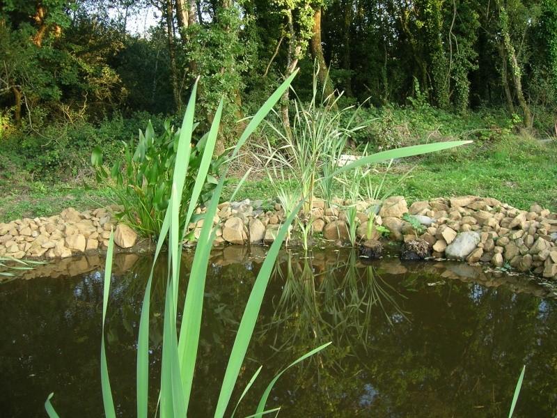 le plan d'eau avance petit à petit Dscn1728