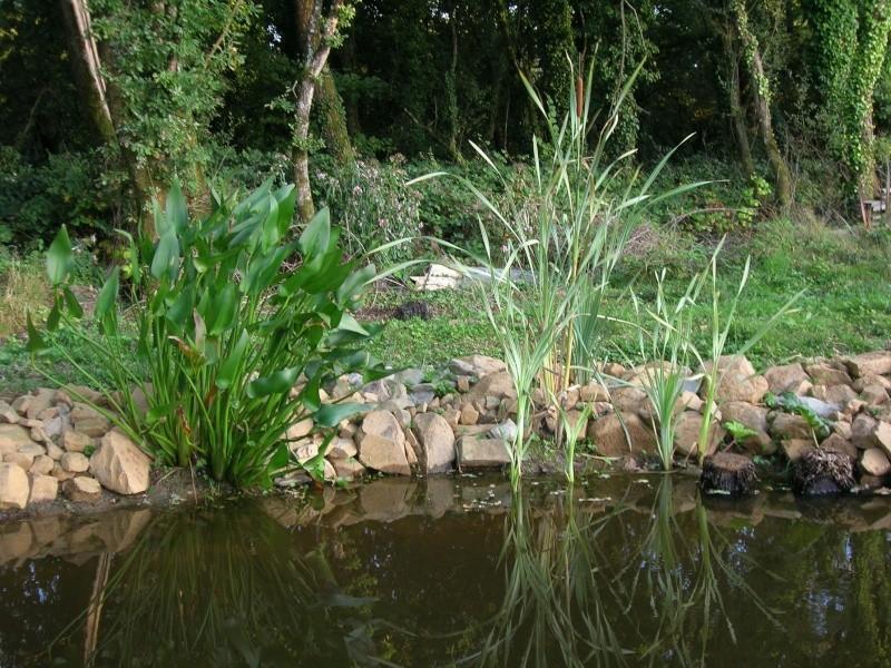 le plan d'eau avance petit à petit Dscn1729