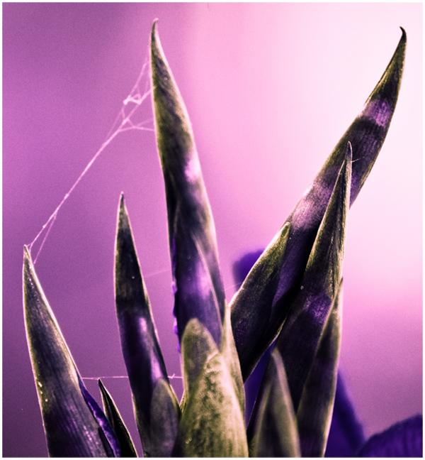 Une fleur passé sous infrarouge Sans_t22