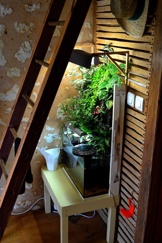Petit Mur Végétal sur un Aquarium de 40L Dsc_0634