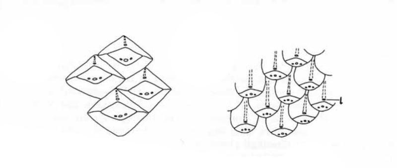 Lepidophloios Sterzel , 1907. Pages_10
