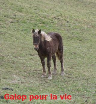 (07) URSULE poulain comtois chocolat 700e [mac] 100_1621