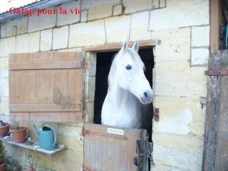 MARADAY MOONRAKER dit Blanc Blanc - ONC né en 1992 - adopté en mars 2009 Blanc_11