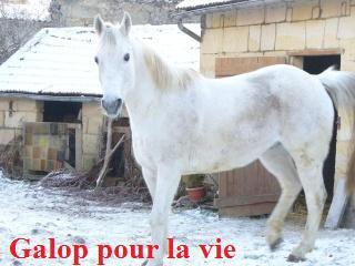 MARADAY MOONRAKER dit Blanc Blanc - ONC né en 1992 - adopté en mars 2009 Blanc_22