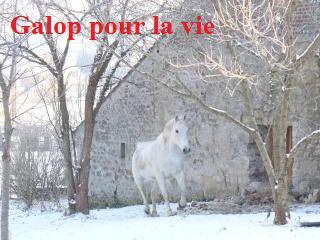 MARADAY MOONRAKER dit Blanc Blanc - ONC né en 1992 - adopté en mars 2009 Blanc_23