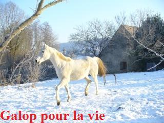 MARADAY MOONRAKER dit Blanc Blanc - ONC né en 1992 - adopté en mars 2009 Blanc_24