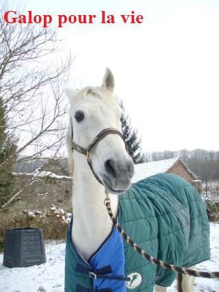 MARADAY MOONRAKER dit Blanc Blanc - ONC né en 1992 - adopté en mars 2009 Blanc_25
