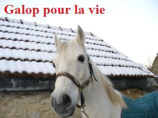 MARADAY MOONRAKER dit Blanc Blanc - ONC né en 1992 - adopté en mars 2009 Blanc_26