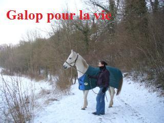 MARADAY MOONRAKER dit Blanc Blanc - ONC né en 1992 - adopté en mars 2009 Blanc_27