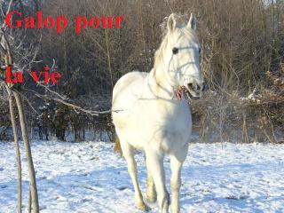MARADAY MOONRAKER dit Blanc Blanc - ONC né en 1992 - adopté en mars 2009 Blanc_29
