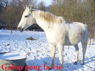 MARADAY MOONRAKER dit Blanc Blanc - ONC né en 1992 - adopté en mars 2009 Blanc_36