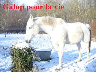 MARADAY MOONRAKER dit Blanc Blanc - ONC né en 1992 - adopté en mars 2009 Blanc_37