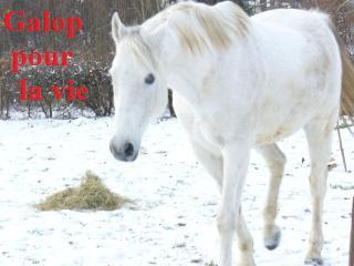 MARADAY MOONRAKER dit Blanc Blanc - ONC né en 1992 - adopté en mars 2009 Blanc_38