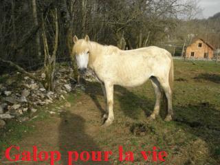 ETOILE -  Camargue 17 ans  Camarg11