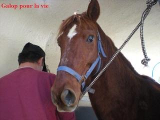 CUPIDON - ONC selle né en 1999 - adopté en juin 2011- hébergé à la Grange des Selles suite à abandon - Page 3 Dscn9113