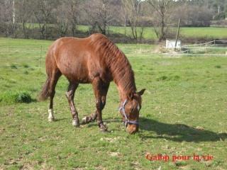 CUPIDON - ONC selle né en 1999 - adopté en juin 2011- hébergé à la Grange des Selles suite à abandon - Page 3 Dscn9120