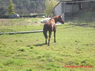 CUPIDON - ONC selle né en 1999 - adopté en juin 2011- hébergé à la Grange des Selles suite à abandon - Page 3 Dscn9123
