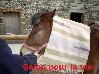 SAFRAN  - ONC Poney né en 2006 - adopté en octobre 2009 par Jean-Claude - Page 6 Imgp2215