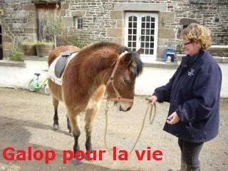 SAFRAN  - ONC Poney né en 2006 - adopté en octobre 2009 par Jean-Claude - Page 6 Imgp2216