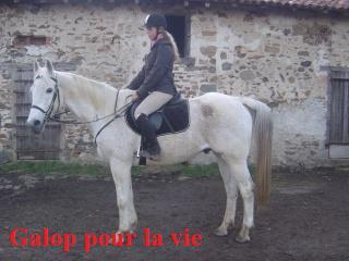 MARADAY MOONRAKER dit Blanc Blanc - ONC né en 1992 - adopté en mars 2009 Photos13