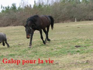 My way d'Eronnville - Hongre - placé en juin 2009 (agnes-p) - Page 3 Poulai10