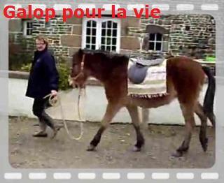 SAFRAN  - ONC Poney né en 2006 - adopté en octobre 2009 par Jean-Claude - Page 6 Th_img11