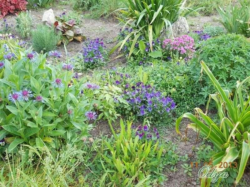 Votre préférence : vivaces - annuelles ou arbustes  Aa_mai33