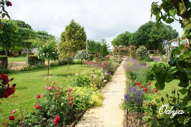 Parc Foulon  ( 49 )Doué la Fontaine Dsc07112