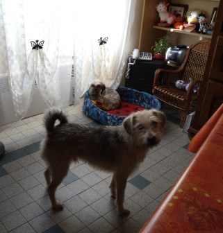 KIWI... croisé griffon adopté en juin 2008 Photo_11