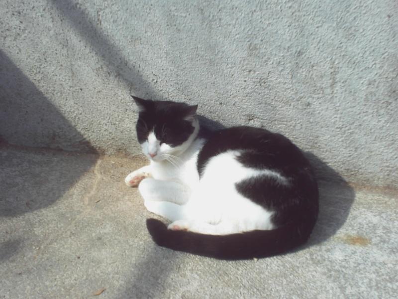 DIEGO (européen noir et blanc)* Pict0028