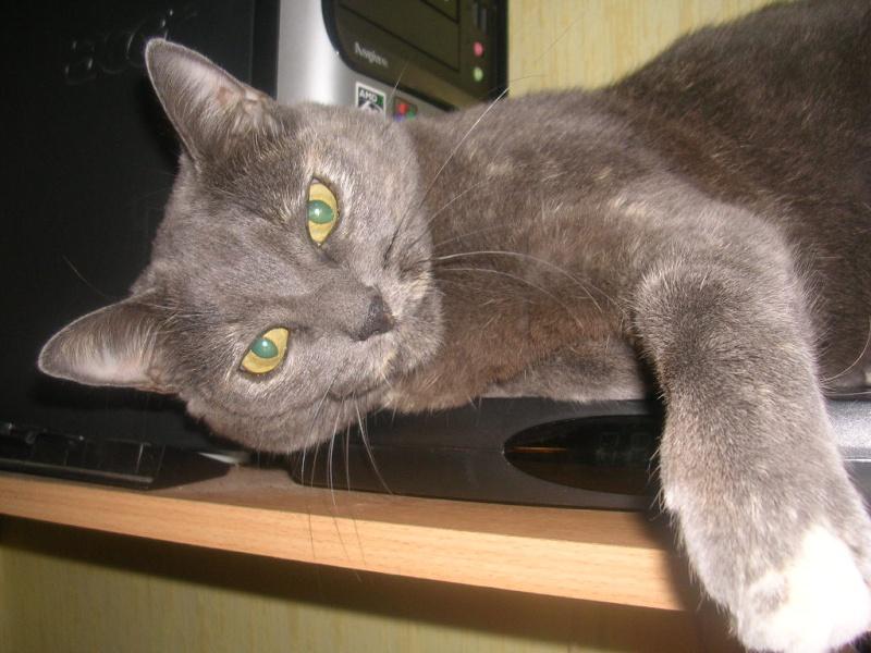 chat 'alors Adam_b12