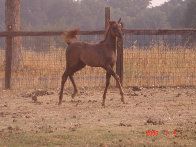 Previous halter champion, excellent producing mare! 02111