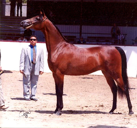 Previous halter champion, excellent producing mare! Molly10