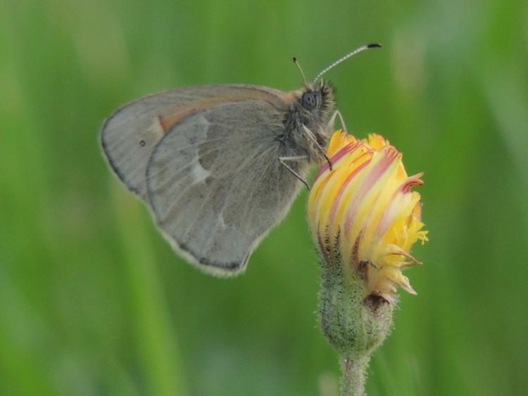 id papillon 1-dscn51