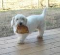 baume démeleur pour chiens ? Carior10
