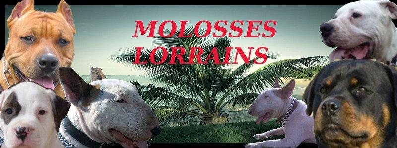 molosses lorrains
