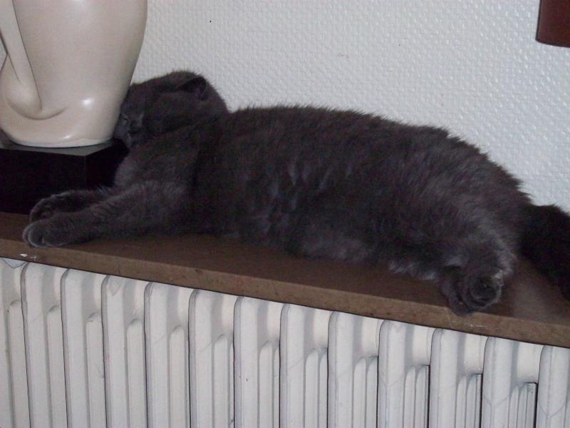 Nous et le radiateur... Photo_14